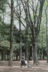 artist-sketching-trees.jpg