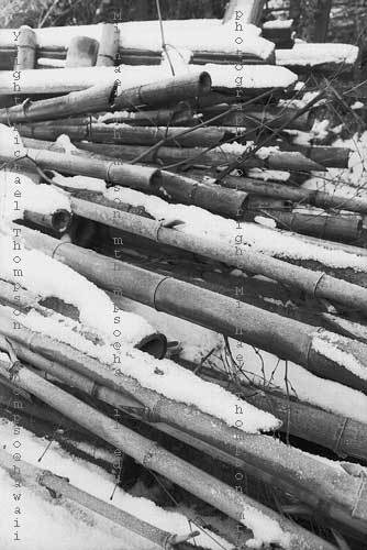 bamboo-with-snow.jpg
