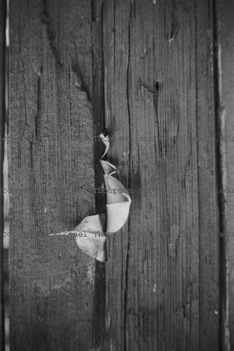 leaves-stuck-in-fence-vrtcl.jpg
