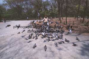 man-feeds-pigeons.jpg